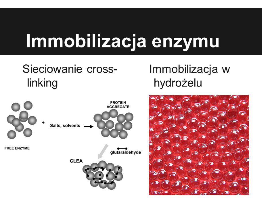 Immobilizacja enzymu Sieciowanie cross- linking Immobilizacja w hydrożelu