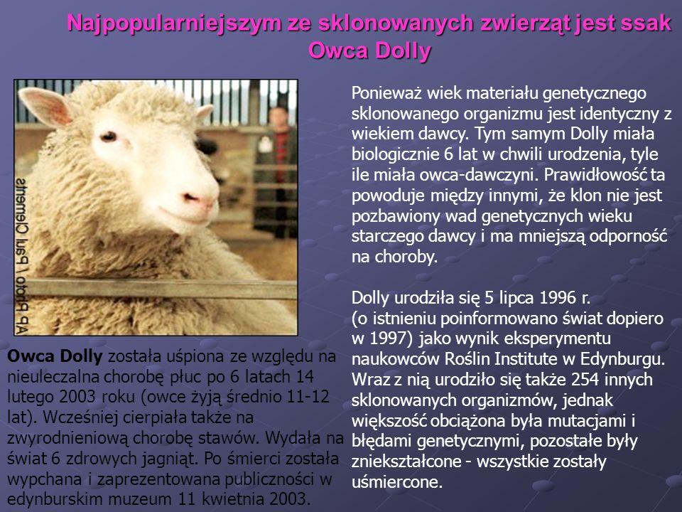 Najpopularniejszym ze sklonowanych zwierząt jest ssak Owca Dolly Ponieważ wiek materiału genetycznego sklonowanego organizmu jest identyczny z wiekiem
