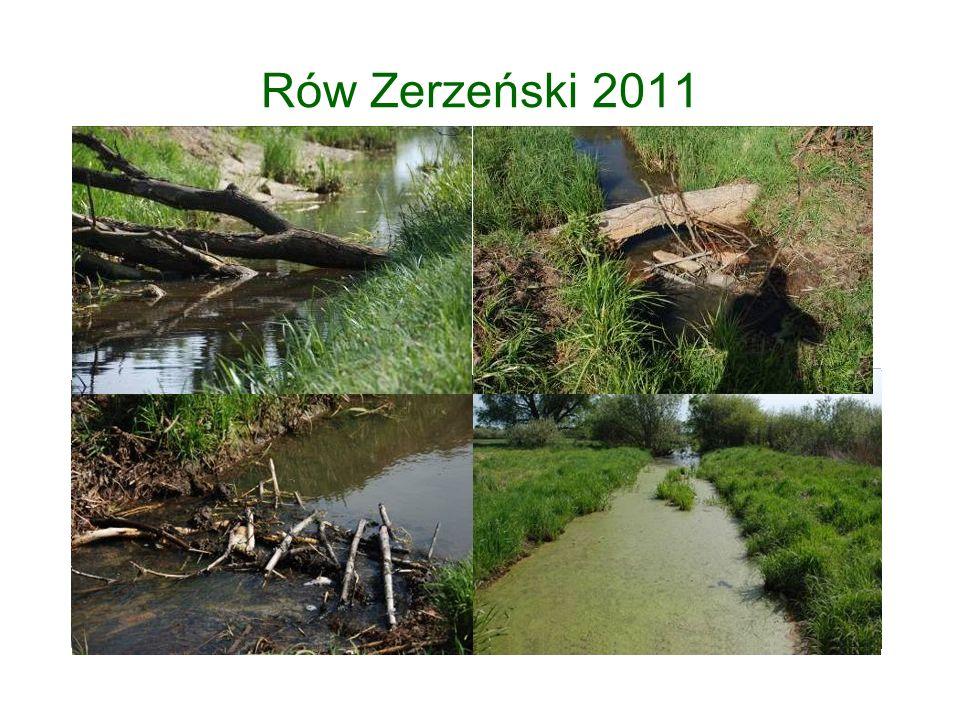 Rów Zerzeński 2011