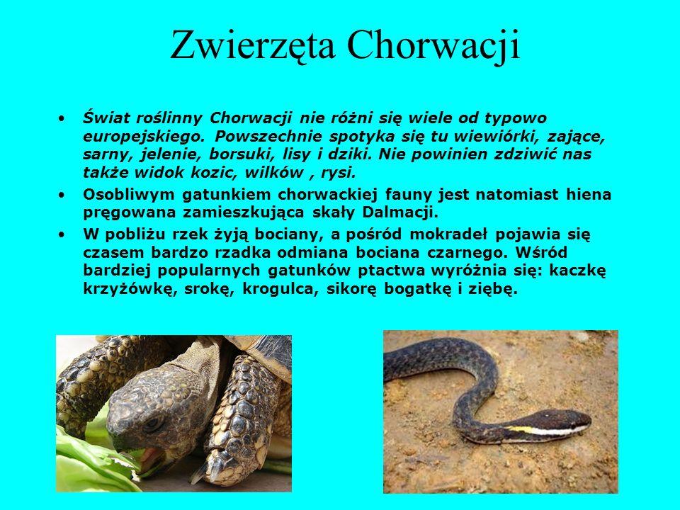 Zwierzęta Chorwacji Świat roślinny Chorwacji nie różni się wiele od typowo europejskiego. Powszechnie spotyka się tu wiewiórki, zające, sarny, jelenie