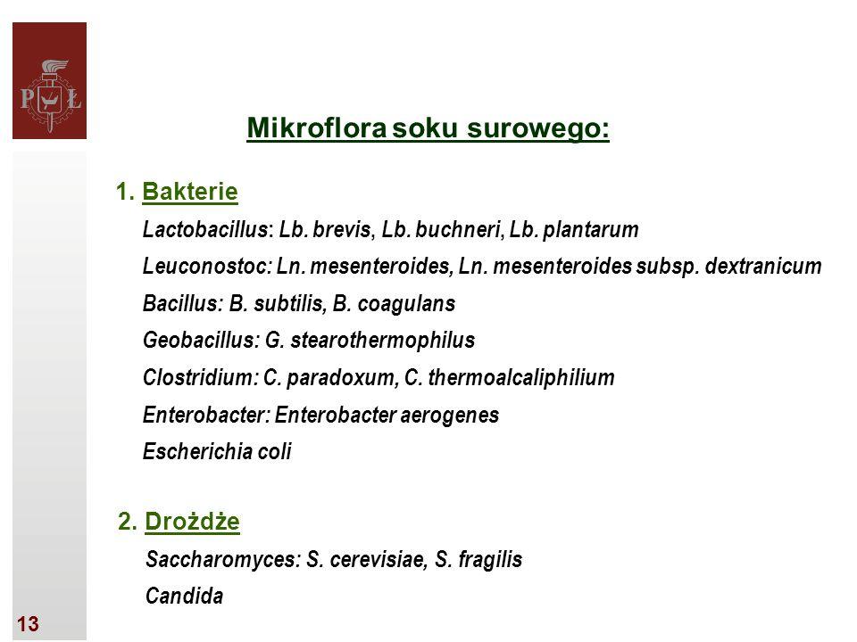 13 Mikroflora soku surowego: 1.Bakterie Lactobacillus : Lb.