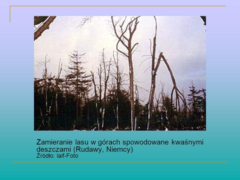 Zamieranie lasu w górach spowodowane kwaśnymi deszczami (Rudawy, Niemcy) Źródło: laif-Foto
