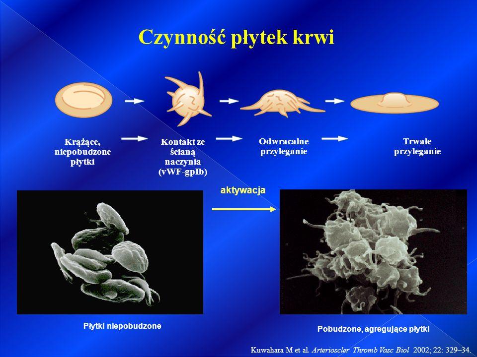 Kuwahara M et al. Arterioscler Thromb Vasc Biol 2002; 22: 329–34.