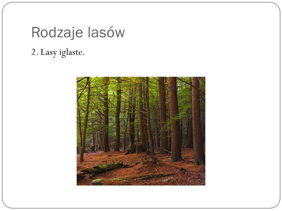 Rodzaje lasów. Drzewa, które rosn ą w lasach iglastych to: sosny Ś wierki jodły