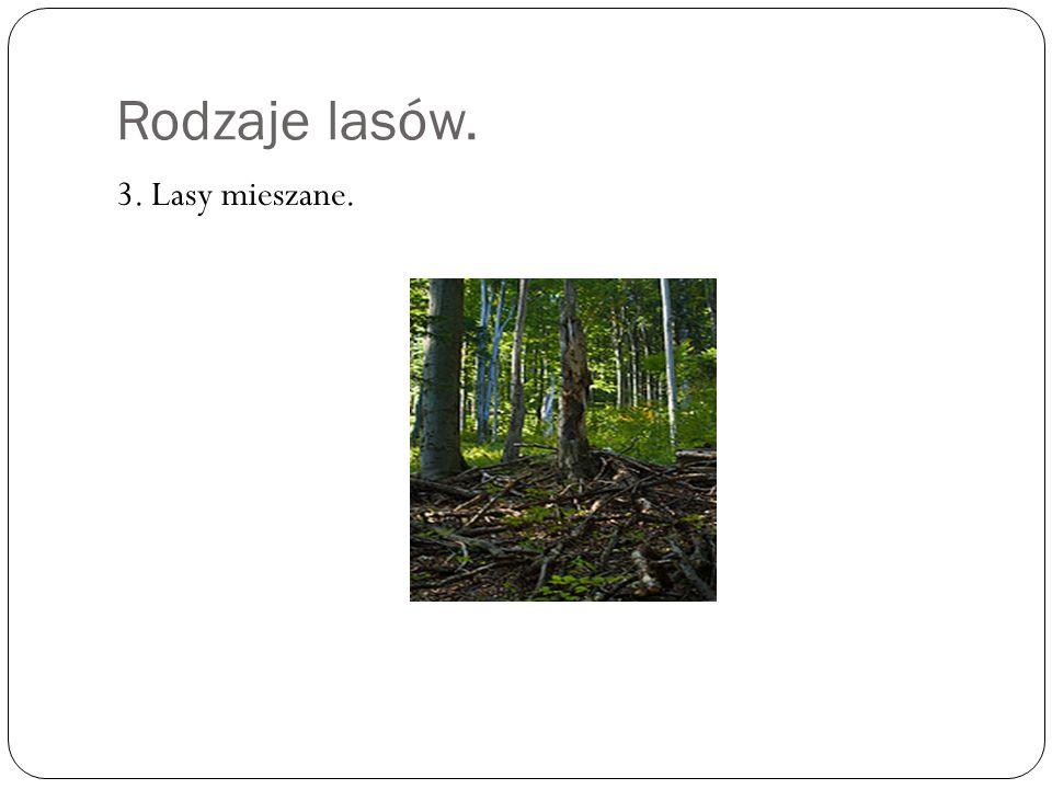 Rodzaje lasów. Drzewa, które rosn ą w lasach mieszanych to: Sosna Jarz ę bina Leszczyna trzmielina.