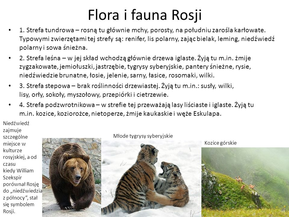 Flora i fauna Rosji 1.