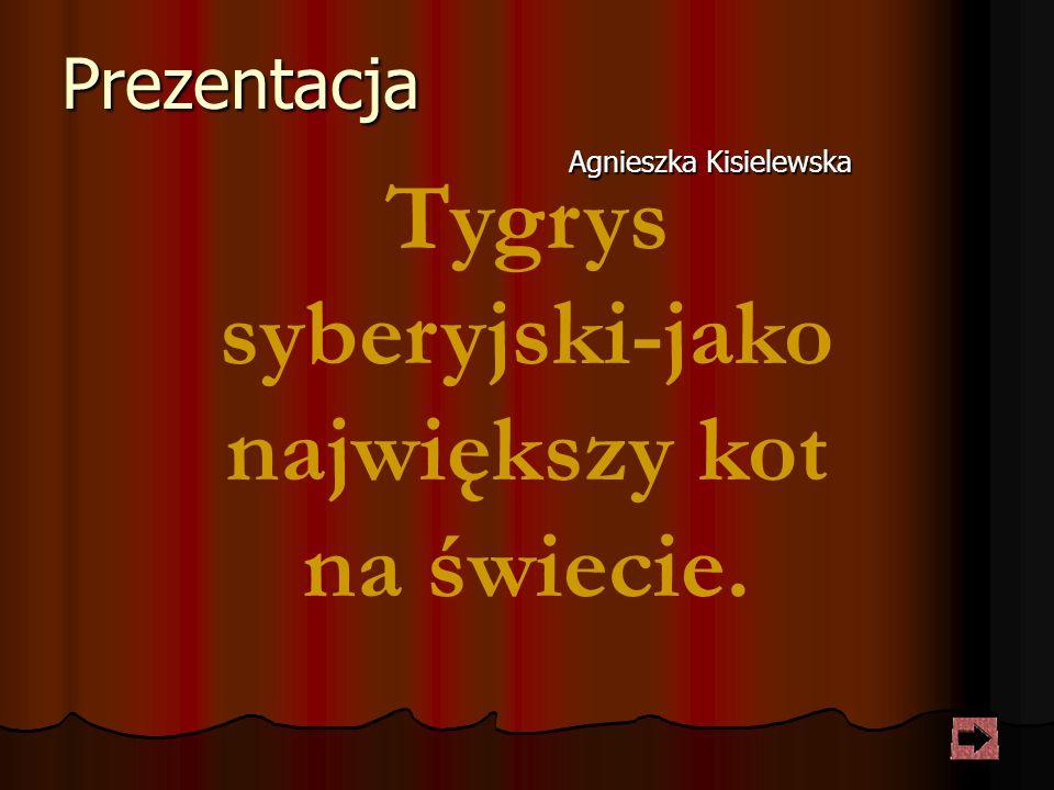 Prezentacja Agnieszka Kisielewska Tygrys syberyjski-jako największy kot na świecie.