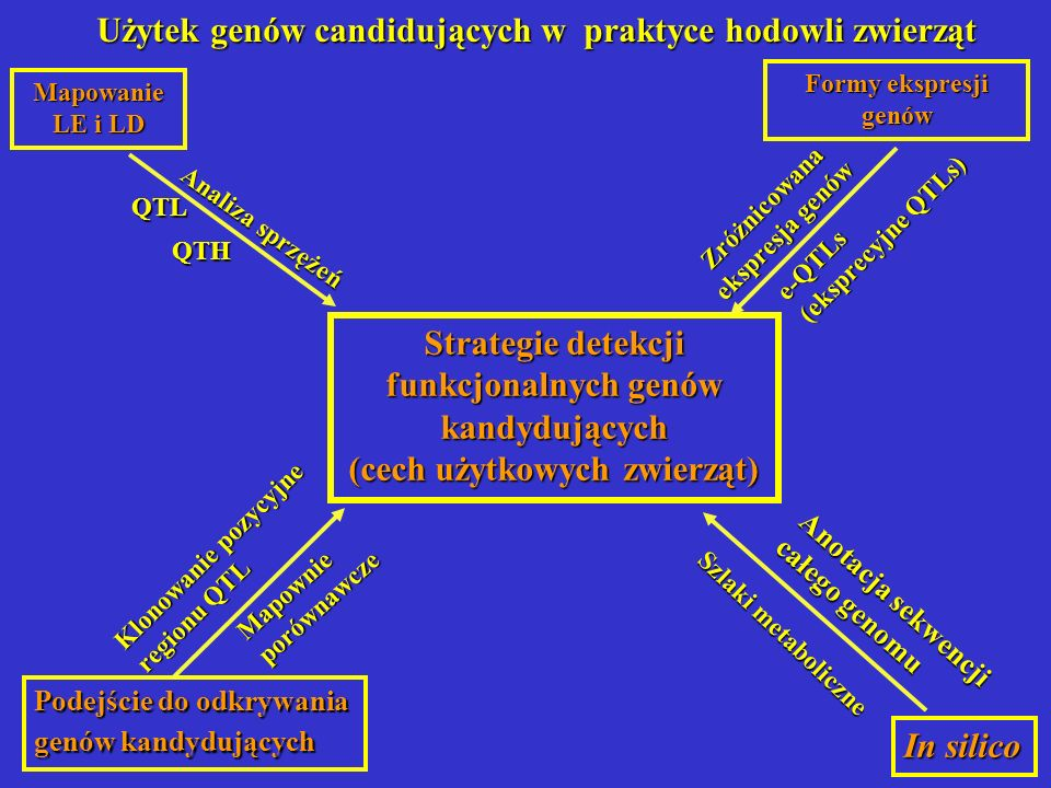 Strategie detekcji funkcjonalnych genów kandydujących (cech użytkowych zwierząt) Mapowanie LE i LD Podejście do odkrywania genów kandydujących In sili