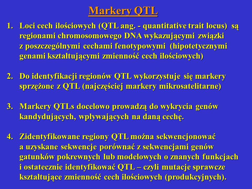 Markery QTL 1.Loci cech ilościowych (QTL ang. - quantitative trait locus) są regionami chromosomowego DNA wykazującymi związki z poszczególnymi cecham