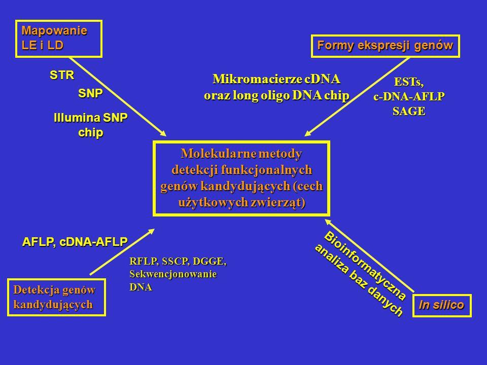 Mapowanie LE i LD In silico Formy ekspresji genów Mikromacierze cDNA oraz long oligo DNA chip STRSTRSTRSTR SNP ESTs, c-DNA-AFLP SAGE Molekularne metod