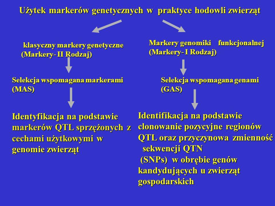 klasyczny markery genetyczne klasyczny markery genetyczne (Markery- II Rodzaj) Selekcja wspomagana markerami (MAS) Identyfikacja na podstawie markerów