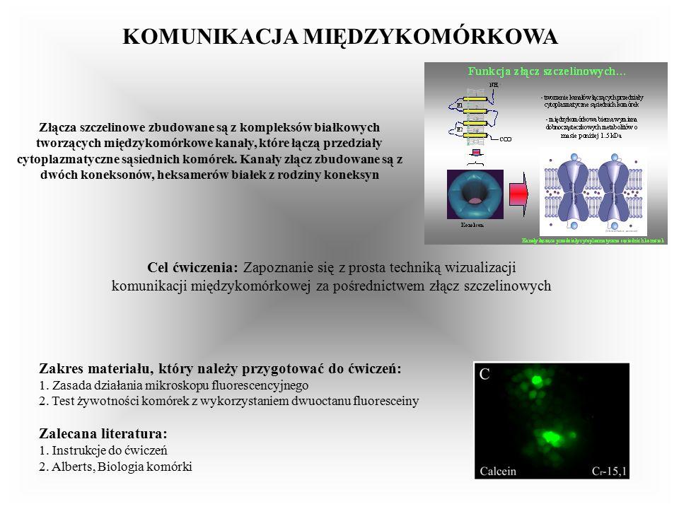 KOMUNIKACJA MIĘDZYKOMÓRKOWA Złącza szczelinowe zbudowane są z kompleksów białkowych tworzących międzykomórkowe kanały, które łączą przedziały cytoplazmatyczne sąsiednich komórek.