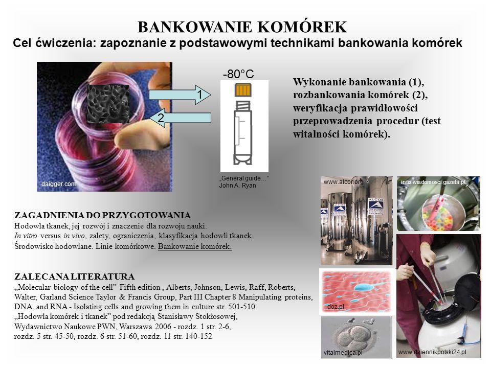 info.wiadomosci.gazeta.pl www.dziennikpolski24.pl Wykonanie bankowania (1), rozbankowania komórek (2), weryfikacja prawidłowości przeprowadzenia procedur (test witalności komórek).