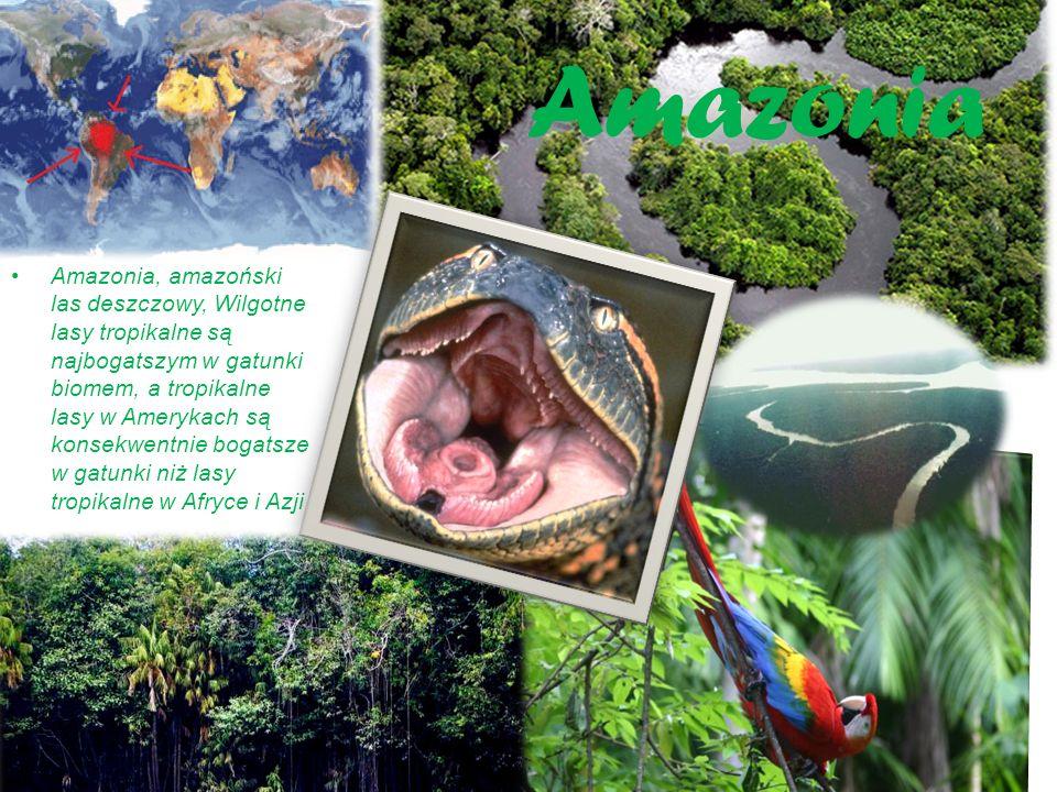 Afryka ń ska Sawanna trawiasta formacja roślinna, strefy międzyzwrotnikowej o klimacie gorącym z wyraźnie zaznaczoną porą suchą, trwającą od 3 do 9 miesięcy oraz porą deszczową.