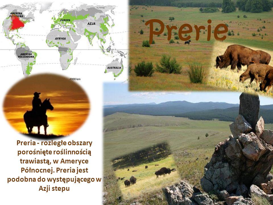 Prerie Preria - rozległe obszary porośnięte roślinnością trawiastą, w Ameryce Północnej.