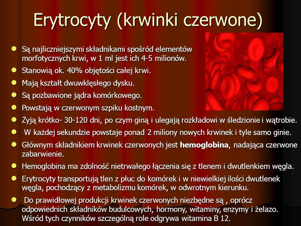 ● Są najliczniejszymi składnikami spośród elementów morfotycznych krwi, w 1 ml jest ich 4-5 milionów.