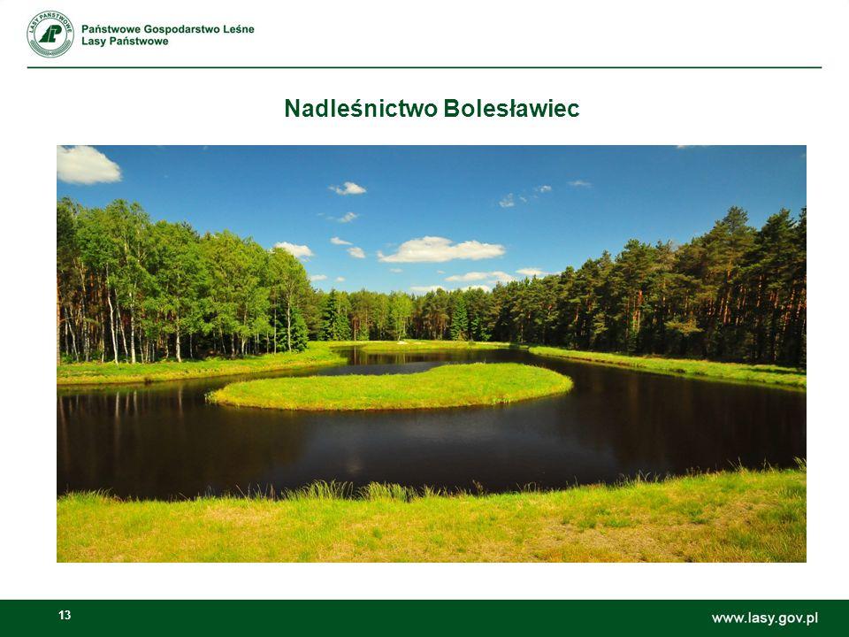 13 Nadleśnictwo Bolesławiec