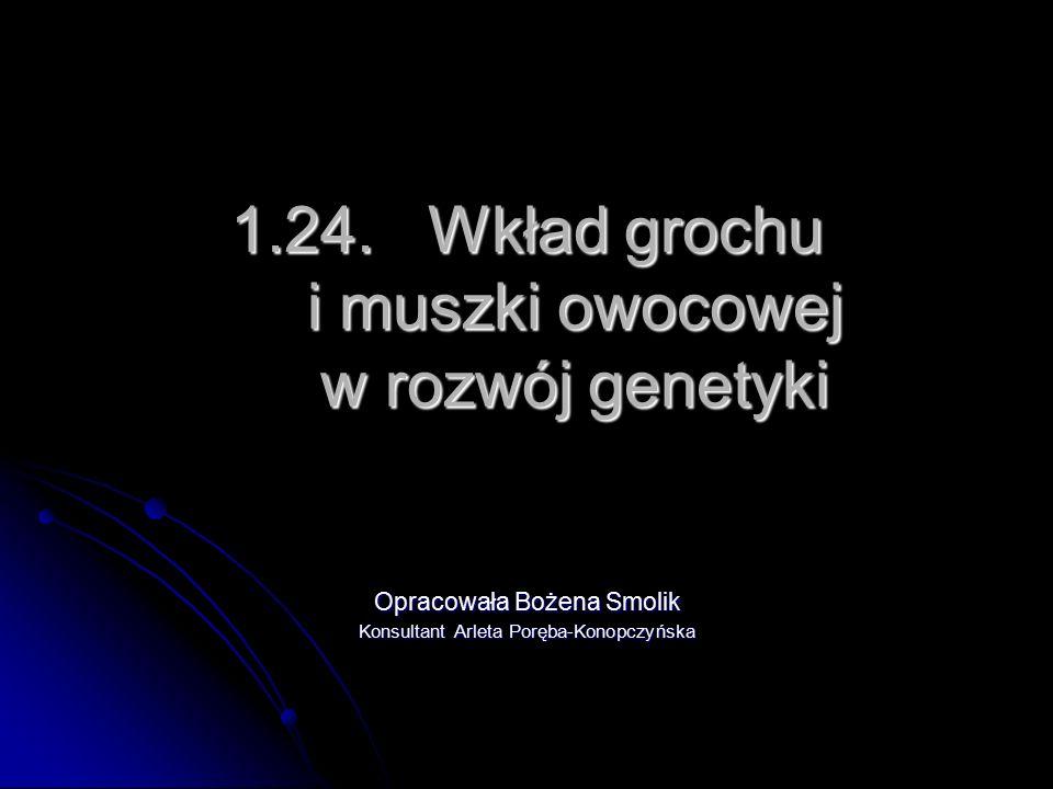 1.24. Wkład grochu i muszki owocowej w rozwój genetyki Opracowała Bożena Smolik Konsultant Arleta Poręba-Konopczyńska