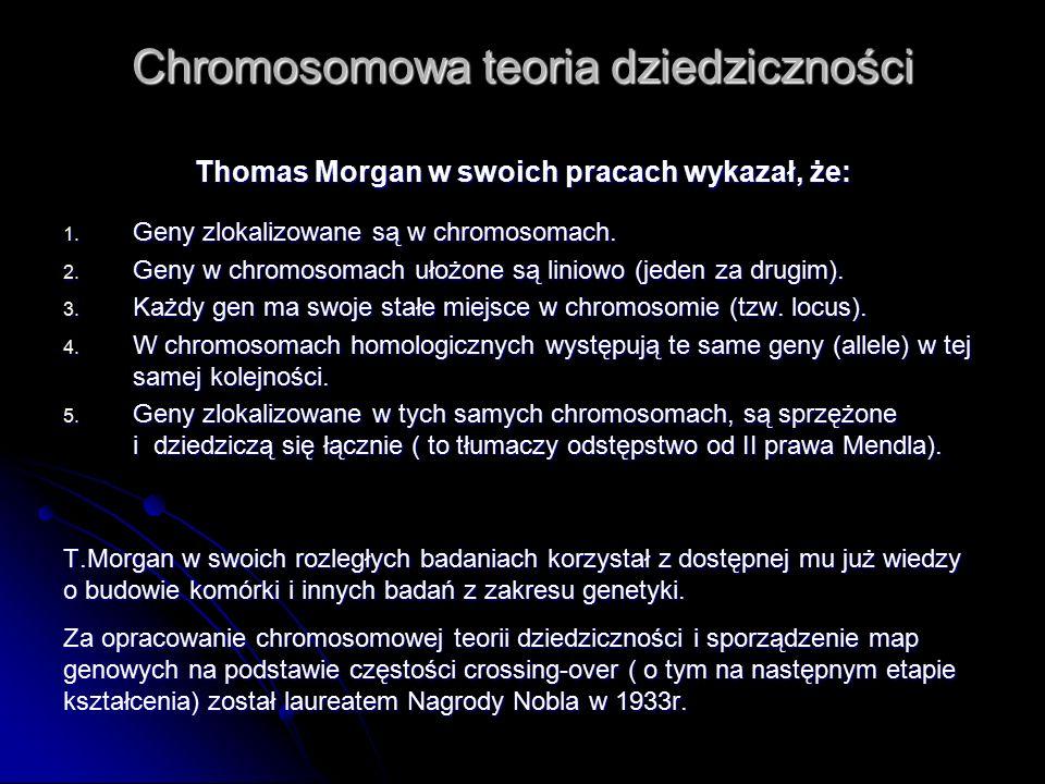 Chromosomowa teoria dziedziczności Thomas Morgan w swoich pracach wykazał, że: 1. Geny zlokalizowane są w chromosomach. 2. Geny w chromosomach ułożone