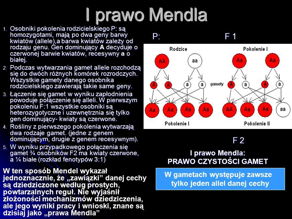 W gametach występuje zawsze tylko jeden allel danej cechy I prawo Mendla 1. Osobniki pokolenia rodzicielskiego P: są homozygotami, mają po dwa geny ba
