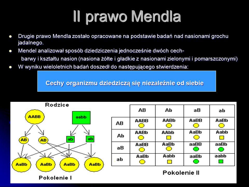 II prawo Mendla Drugie prawo Mendla zostało opracowane na podstawie badań nad nasionami grochu jadalnego. Drugie prawo Mendla zostało opracowane na po