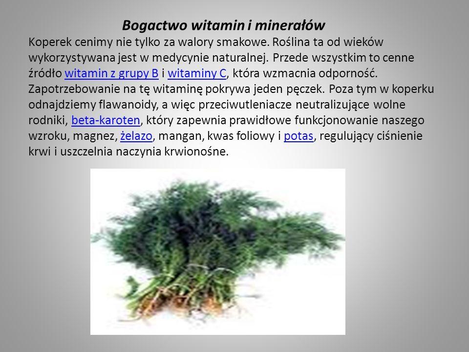 Bogactwo witamin i minerałów Koperek cenimy nie tylko za walory smakowe.
