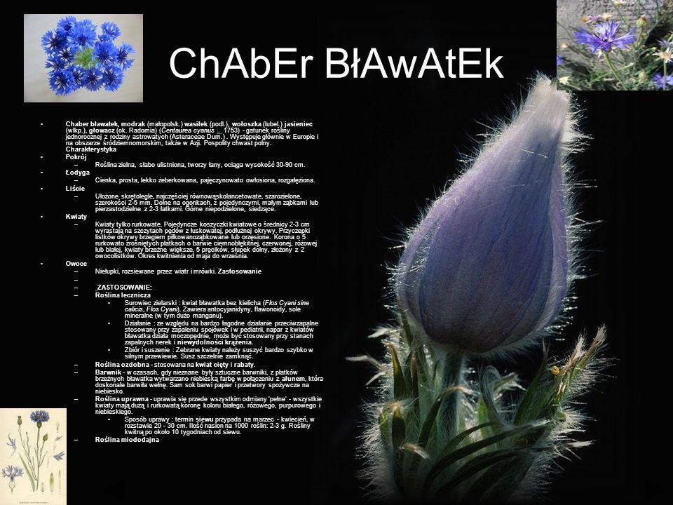 ChAbEr BłAwAtEk Chaber bławatek, modrak (małopolsk.) wasiłek (podl.), wołoszka (lubel.) jasieniec (wlkp.), głowacz (ok.