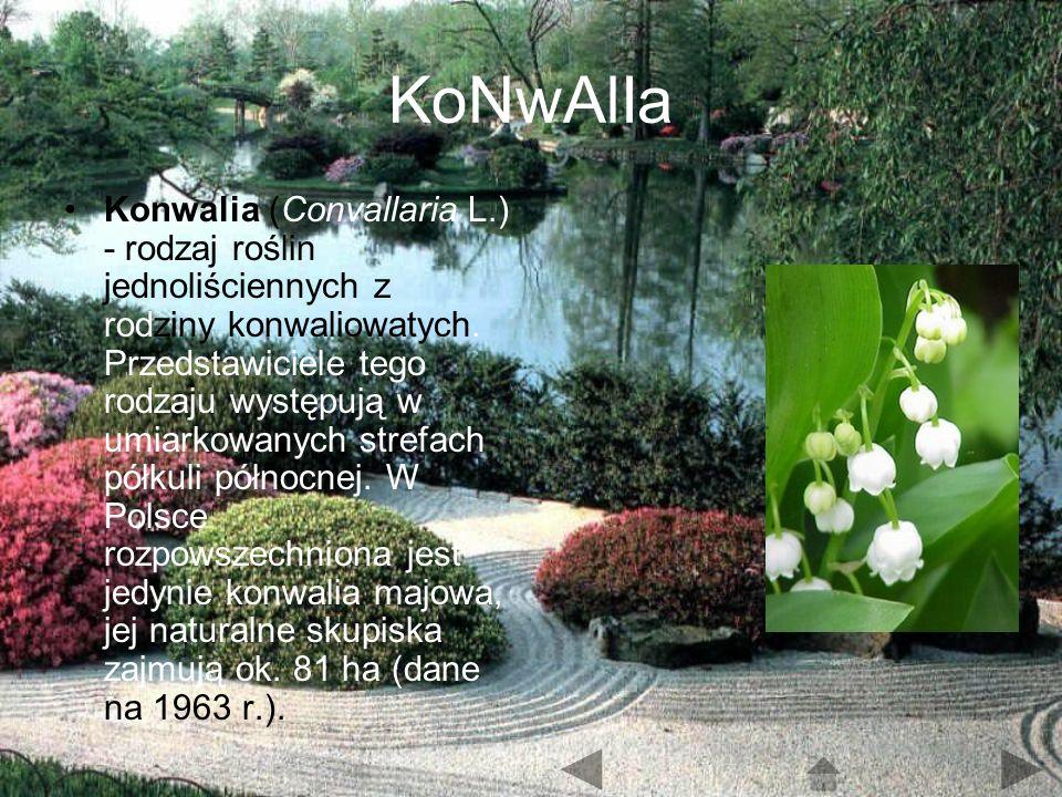 KoNwAlIa Konwalia (Convallaria L.) - rodzaj roślin jednoliściennych z rodziny konwaliowatych.