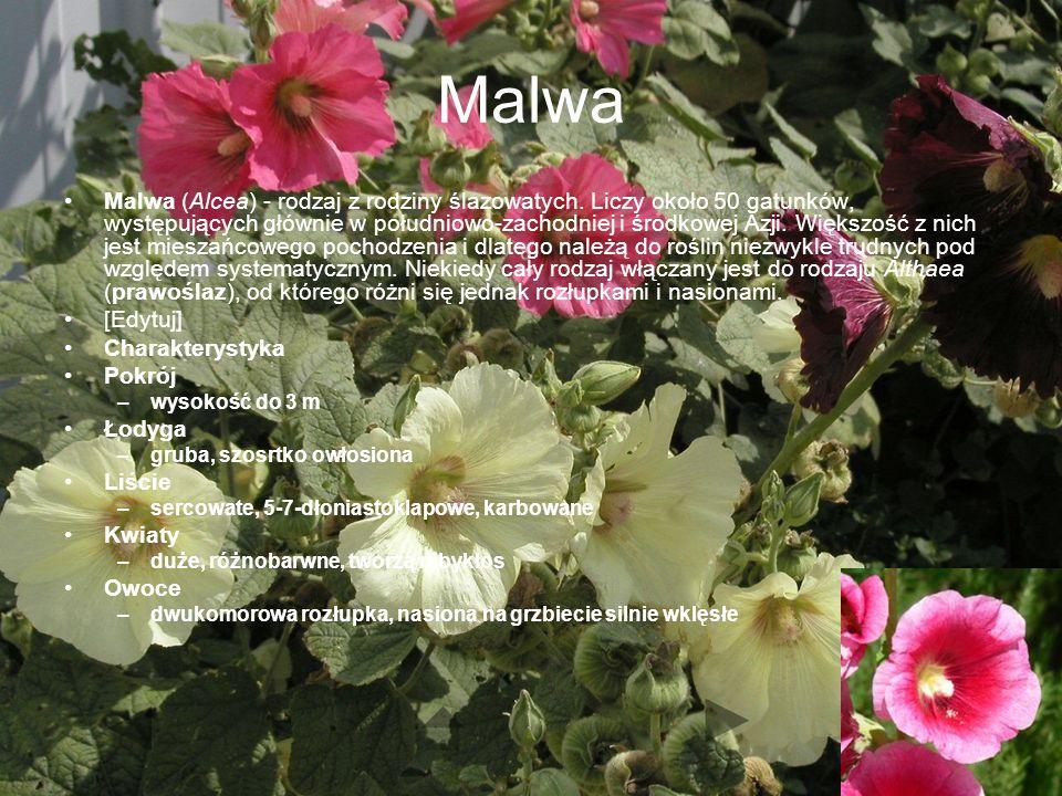 Malwa Malwa (Alcea) - rodzaj z rodziny ślazowatych.