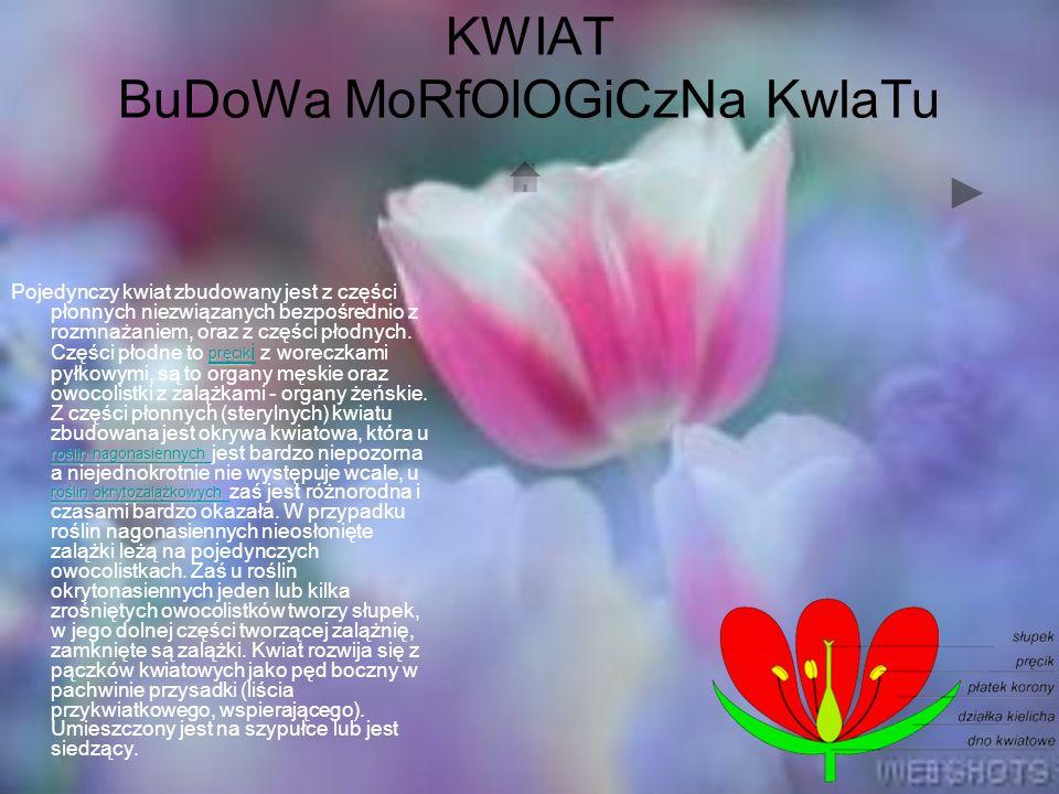 KWIAT BuDoWa MoRfOlOGiCzNa KwIaTu pręcik roślin nagonasiennych roślin okrytozalążkowych pręcik roślin nagonasiennych roślin okrytozalążkowych Pojedynczy kwiat zbudowany jest z części płonnych niezwiązanych bezpośrednio z rozmnażaniem, oraz z części płodnych.