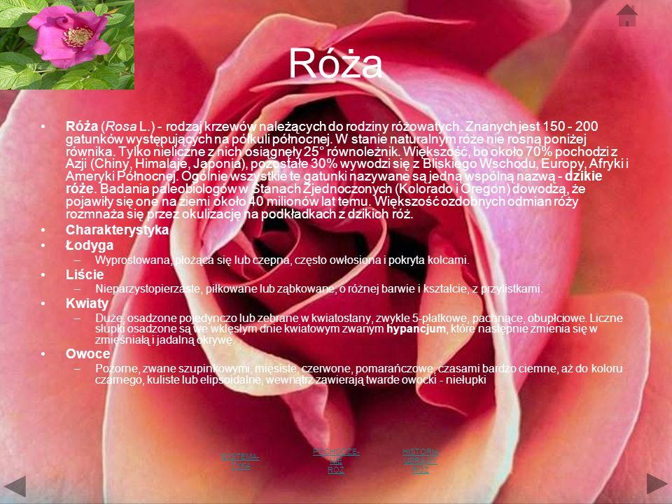 Róża Róża (Rosa L.) - rodzaj krzewów należących do rodziny różowatych.