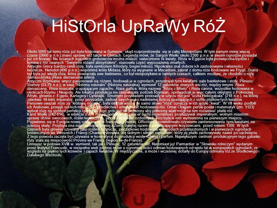 HiStOrIa UpRaWy RóŻ Około 5000 lat temu róża już była hodowana w Sumerze, skąd rozprzestrzeniła się w całej Mezopotami.