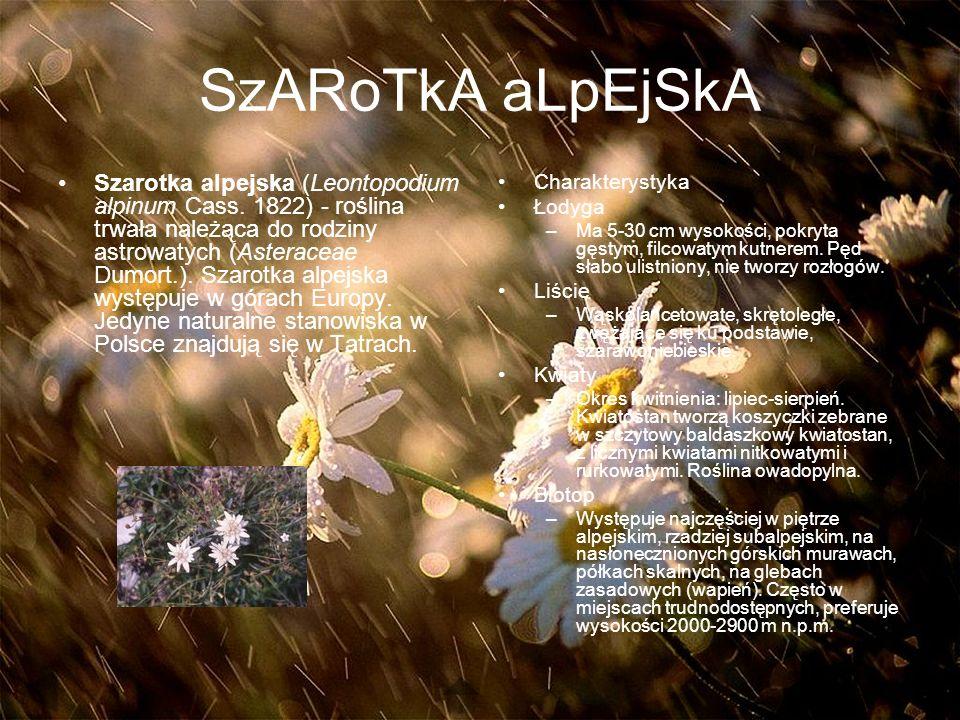 SzARoTkA aLpEjSkA Szarotka alpejska (Leontopodium alpinum Cass.