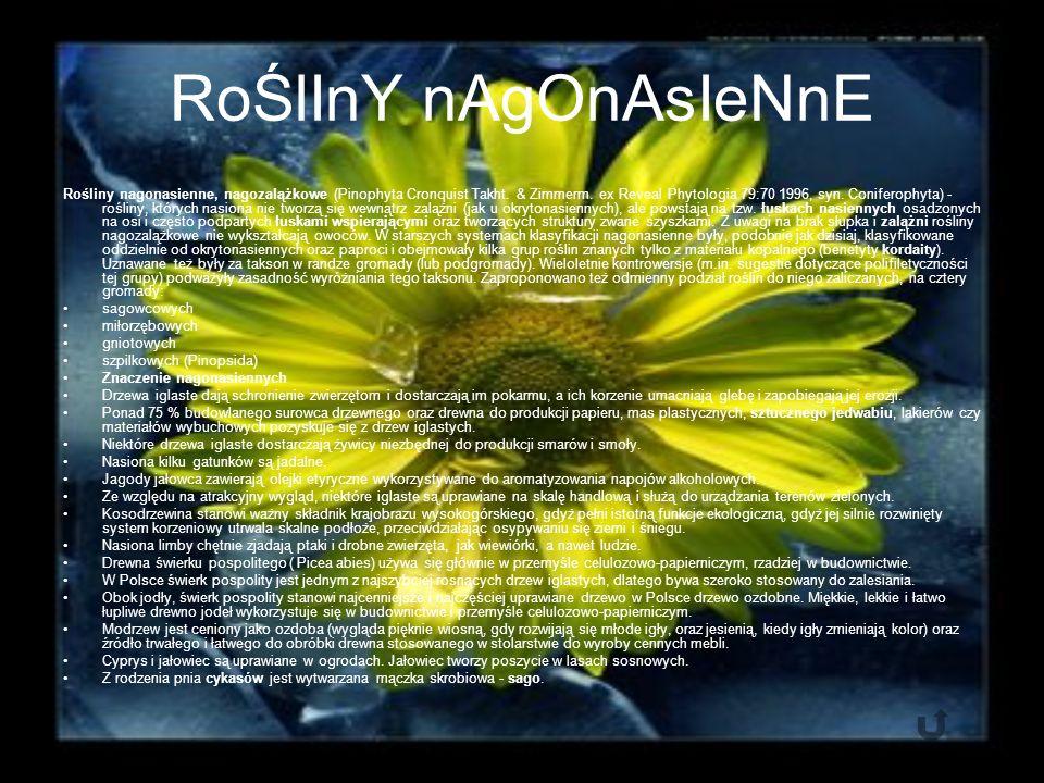 RoŚlInY nAgOnAsIeNnE Rośliny nagonasienne, nagozalążkowe (Pinophyta Cronquist Takht.