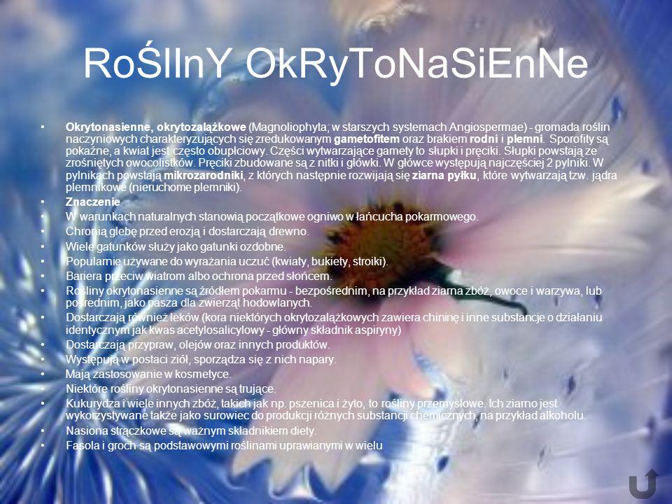 RoŚlInY OkRyToNaSiEnNe Okrytonasienne, okrytozalążkowe (Magnoliophyta; w starszych systemach Angiospermae) - gromada roślin naczyniowych charakteryzujących się zredukowanym gametofitem oraz brakiem rodni i plemni.