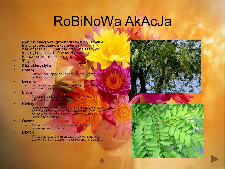 RoBiNoWa AkAcJa Robinia akacjowa (grochodrzew biały, robinia biała, grochodrzew akacjowaty) (Robinia pseudoacacia L.) - gatunek drzew należący do rodziny bobowatych.