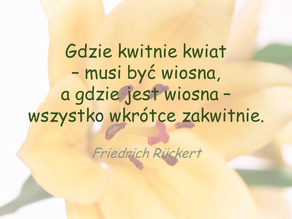 Gdzie kwitnie kwiat – musi być wiosna, a gdzie jest wiosna – wszystko wkrótce zakwitnie.