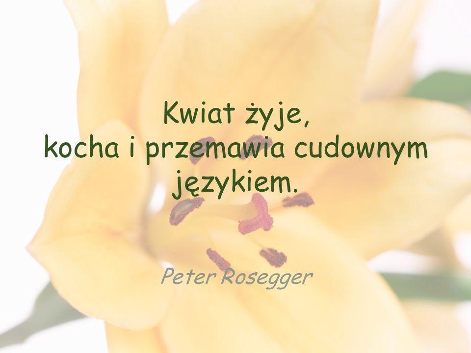 Kwiat żyje, kocha i przemawia cudownym językiem. Peter Rosegger