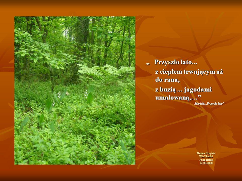 """Gmina Przyłek Wieś Rudki Jagodzisko 12.05.2008 """" Przyszło lato..."""