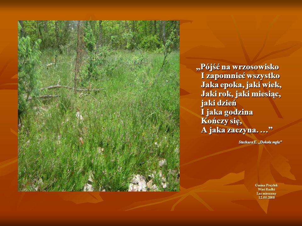 """Gmina Przyłek Wieś Rudki Las mieszany 12.05.2008 """"Pójść na wrzosowisko I zapomnieć wszystko Jaka epoka, jaki wiek, Jaki rok, jaki miesiąc, jaki dzień I jaka godzina Kończy się, A jaka zaczyna."""
