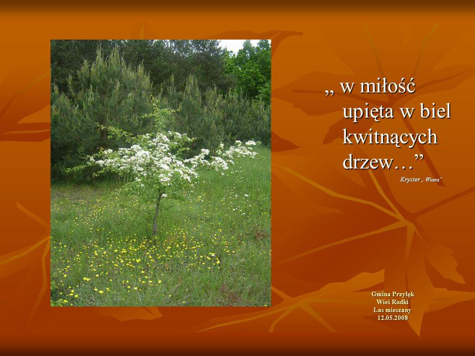 """Gmina Przyłęk Wieś Rudki Las mieszany 12.05.2008 """" w miłość upięta w biel kwitnących drzew… Kryster """" Wiara Kryster """" Wiara"""