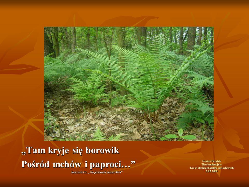 """Gmina Przyłek Wieś Andrzejów Las w okolicach dołów potorfowych 2.05.2008 """"Tam kryje się borowik Pośród mchów i paproci… Janczrski Cz."""