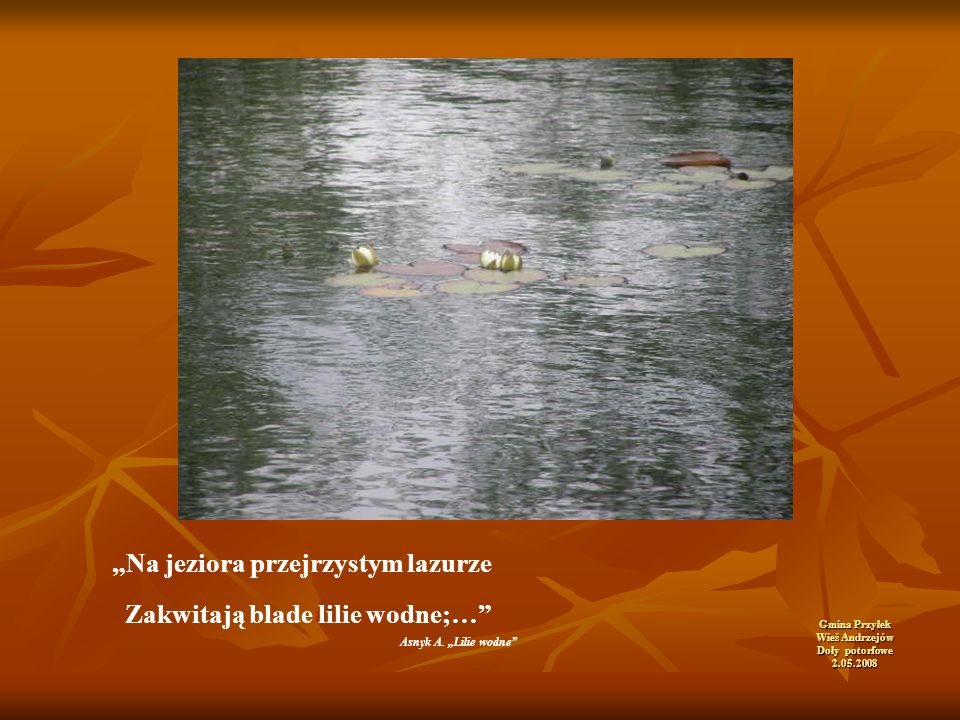 """Gmina Przyłek Wieś Andrzejów Doły potorfowe 2.05.2008 """"Na jeziora przejrzystym lazurze Zakwitają blade lilie wodne;… Asnyk A."""
