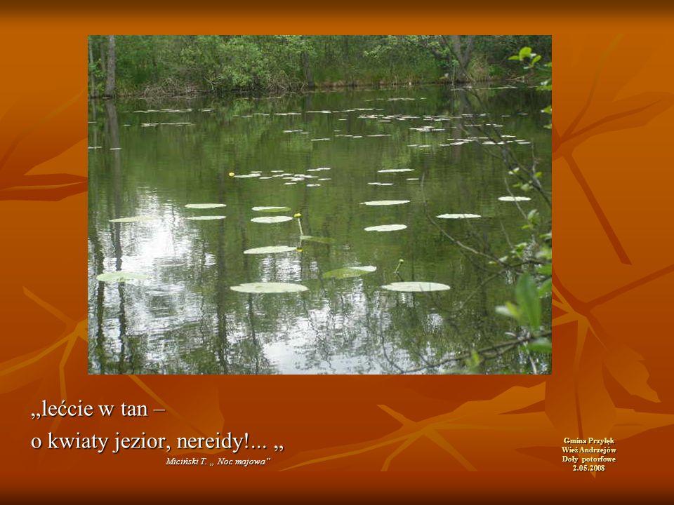 """Gmina Przyłęk Wieś Andrzejów Doły potorfowe 2.05.2008 """"lećcie w tan – o kwiaty jezior, nereidy!..."""
