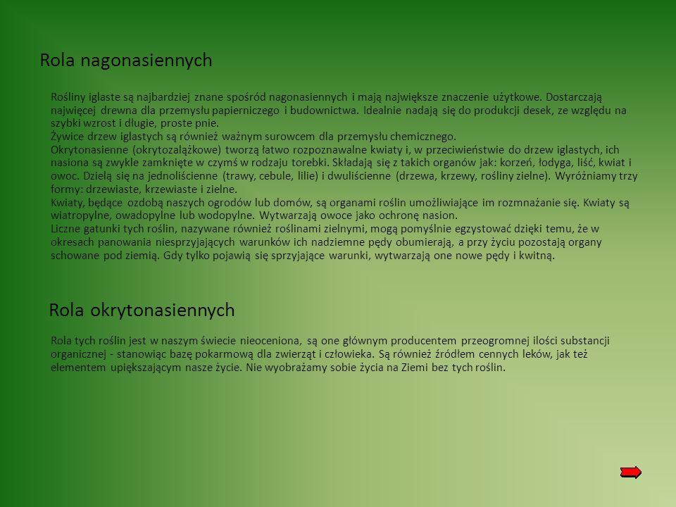 Rola nagonasiennych Rośliny iglaste są najbardziej znane spośród nagonasiennych i mają największe znaczenie użytkowe.