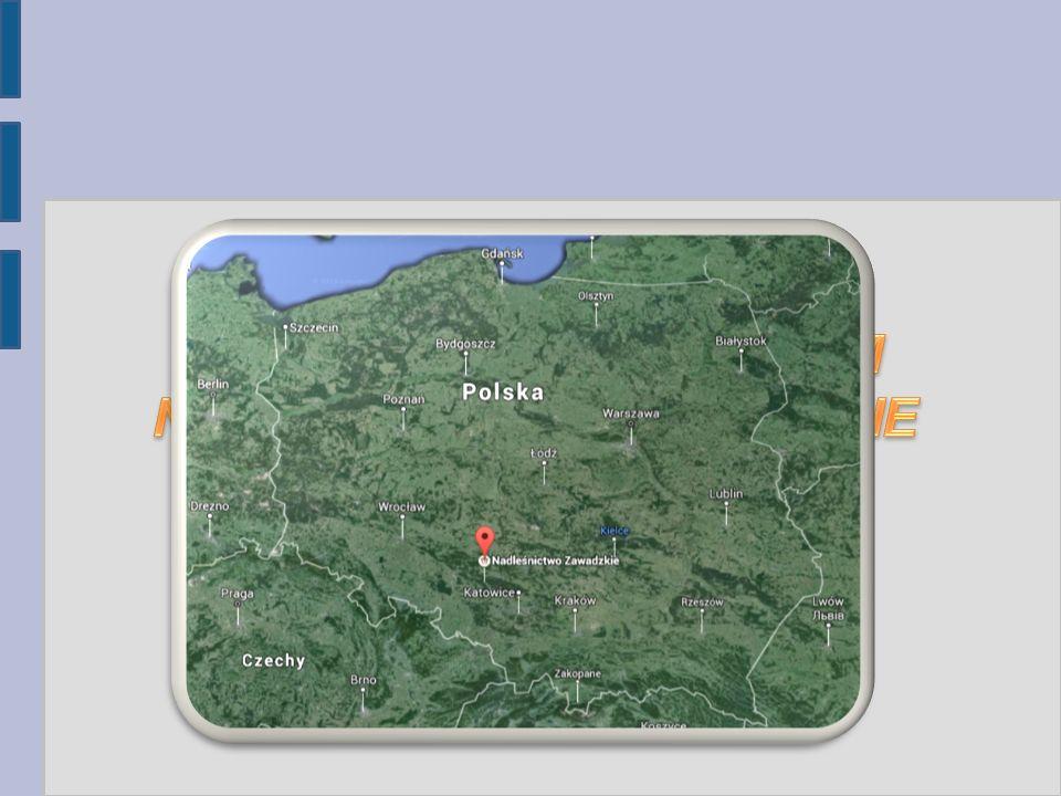 Nasze lasy można nazwać hrabiowskimi, ponieważ nim przejęło je Państwo Polskie, znajdowały się one w rękach hrabiów i książąt, takich jak: -hrabia Jerzy von Redern -rodzina strzelecka Collonów -hrabia Andrzej von Renard -książę Otton Stolberg-Wernigerode -hrabia Franz Hubert von Tiele-Winckler W okresie międzywojennym należały do państwa niemieckiego, a w 1945 r przeszły na własność Polski i zostały podzielone na leśnictwa, jednym z nich jest Jaźwin, z którego pochodzi nasz bohater.