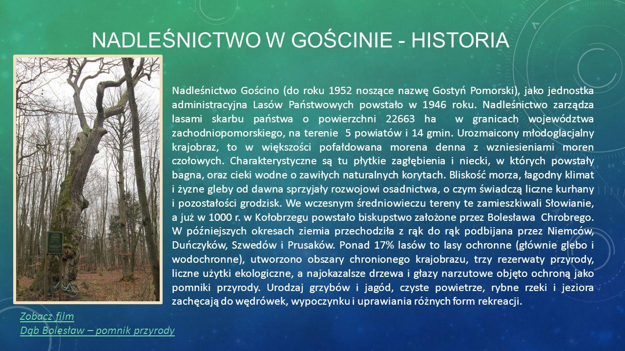 NADLEŚNICTWO W GOŚCINIE - HISTORIA Nadleśnictwo Gościno (do roku 1952 noszące nazwę Gostyń Pomorski), jako jednostka administracyjna Lasów Państwowych