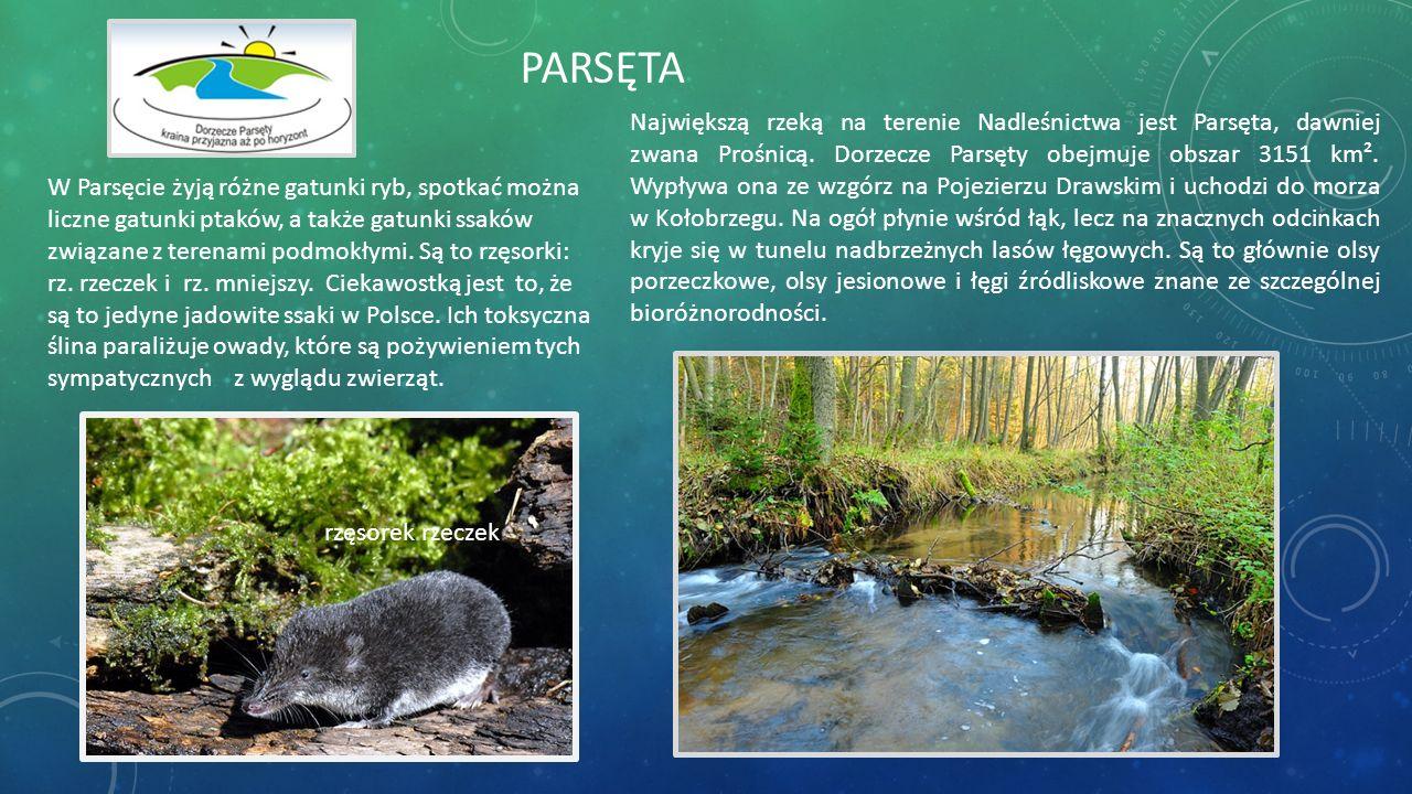 Największą rzeką na terenie Nadleśnictwa jest Parsęta, dawniej zwana Prośnicą. Dorzecze Parsęty obejmuje obszar 3151 km². Wypływa ona ze wzgórz na Poj