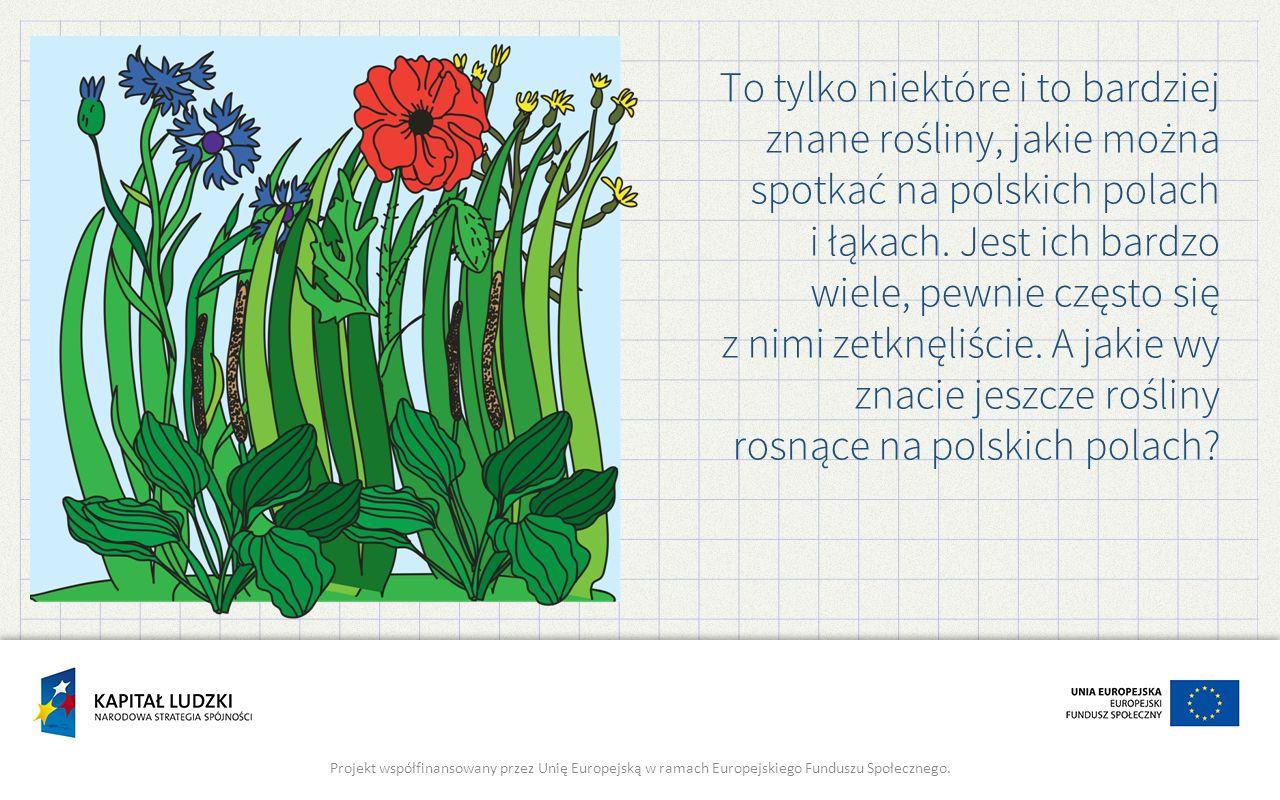 To tylko niektóre i to bardziej znane rośliny, jakie można spotkać na polskich polach i łąkach. Jest ich bardzo wiele, pewnie często się z nimi zetknę