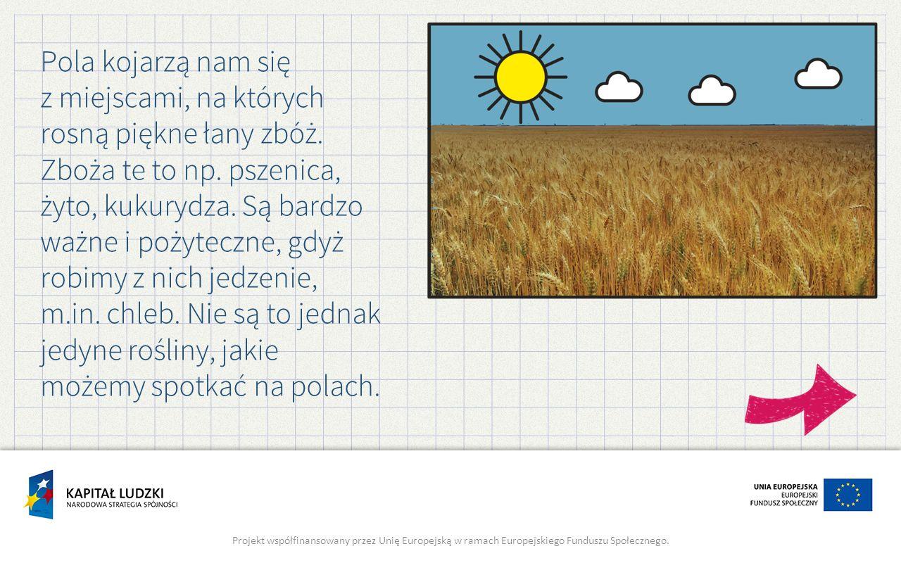 Pola kojarzą nam się z miejscami, na których rosną piękne łany zbóż. Zboża te to np. pszenica, żyto, kukurydza. Są bardzo ważne i pożyteczne, gdyż rob